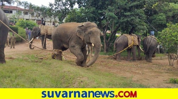 Forest department capture  elephant in Hassan snr