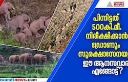 <p>15 elephants wandering 500 km journey in china</p>
