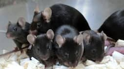 <p>space mouse sperm gives birth</p>