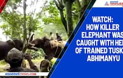 Watch: How killer elephant was caught with help of trained trucker Abhimanyu