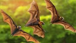 <p>bat</p>