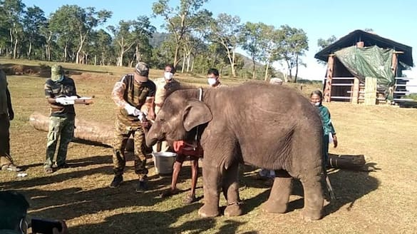 No worries; The covid test result of the elephants in Mudumalai is negative