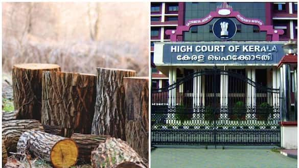 muttil tree felling case anticipatory bail plea of accused in high court