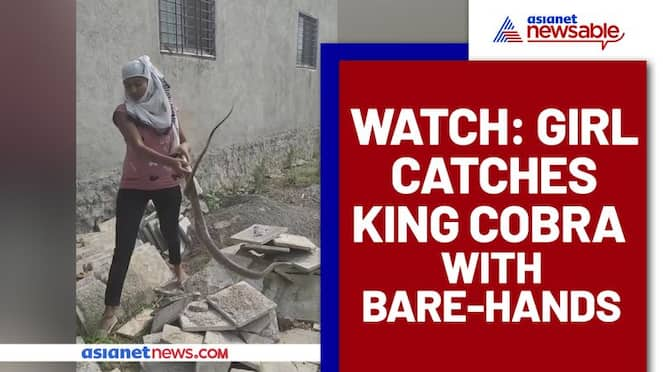 Girl Catches King Cobra With Bare Hands; Video Goes Viral - gps