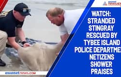 Watch: Stranded stingray rescued by Tybee Island Police Department; netizens shower praises