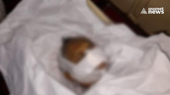 rats chew womans dead body kept in mortuary hospital officials admitted the fall