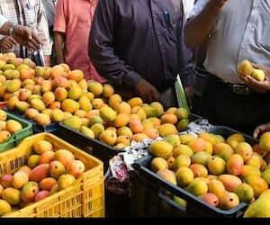 Food Safty Officers seize 7 tonnes of mangoes .. Destroyed