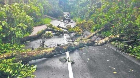 Authorities in Idukki not to see the order to cut down dangerous trees before the monsoon
