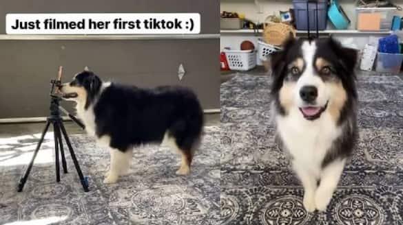 Dog Makes Her Own TikTok Video