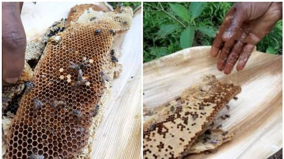 Honey collection season starts in Wayanad; Tribals say availability is low