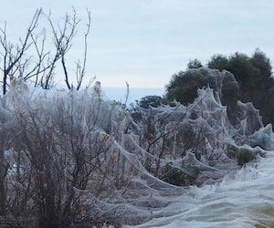 Giant Spiderwebs Blanket Australia After Flooding viral photos