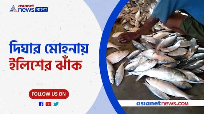 Good news for Bengali food lovers, hilsa fish have came in the market Pnb