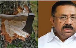 <p>M M hassan Muttil tree felling</p>
