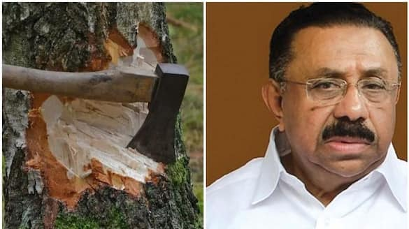 muttil tree felling  UDF will hold dharnas in 1000 centers