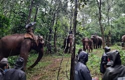 <p>Elephant found wounded</p>