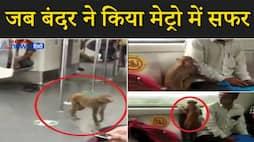 मेट्रो में दिखा गजब नजारा, बंदर ने किया सफर, यात्री के पास बैठ करने लगा ये काम