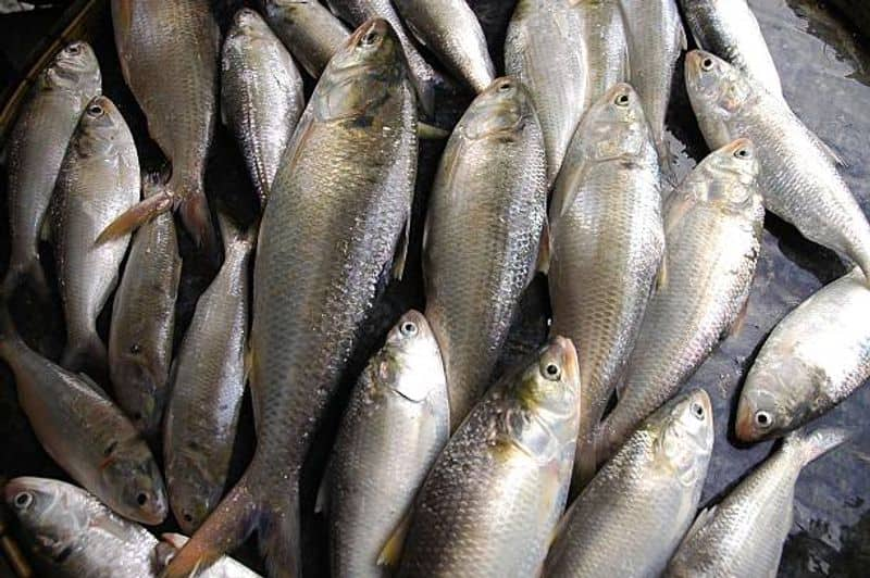 registration of the trawler will be canceled says Akhil Giri on small hilsa issue bmm