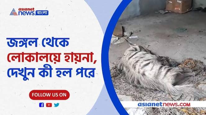 An elderly injured hyena was rescued from Jhalda Pnb