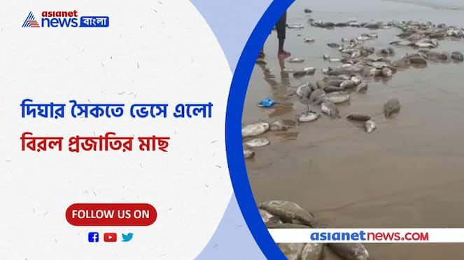 Thousands of rare species of fish were found on the shores of Digha Pnb