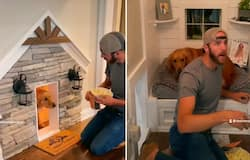 <p>Human and dog watch movie inside dog's house; watch adorable video</p>