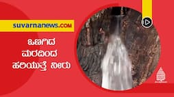 Super Special News Water Springs From Tree in Europe dpl