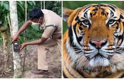 <p>Tiger Wayanad</p>