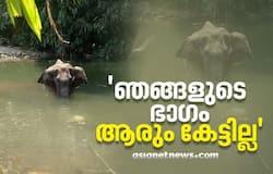 <p>elephant</p>