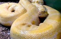 <p>snake</p>