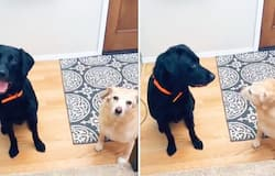 <p>Watch: Girl tells her name for the first time to pet dogs; their adorable reaction wins netizens hearts</p>