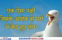 <p>Seagull</p>