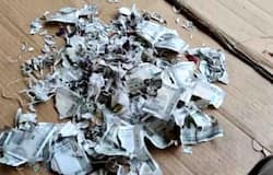 <p>rats chew currency</p>