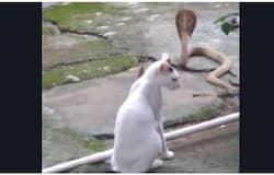 <p>cat</p>