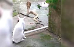 cat and snakecat and snake
