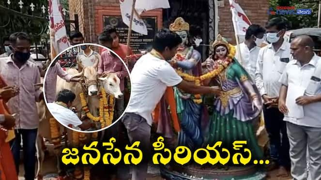 Janasena Serious On Cow Slaughter In Andhra University akp