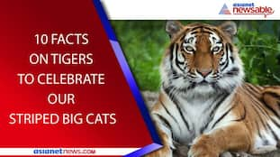 International Tiger Day: 10 Facts To Celebrate Our Striped Big Cats