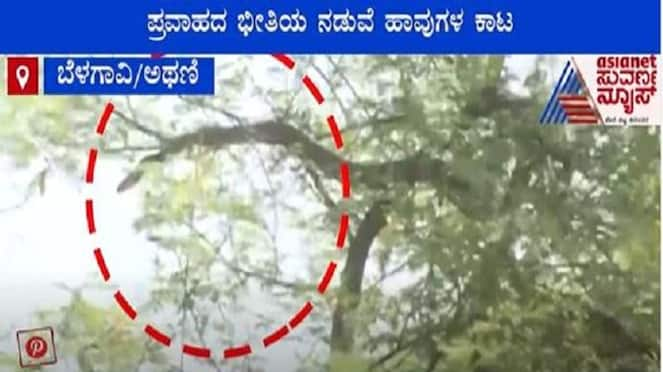 Aftermath of Floods Belagavi Villagers Live in Fear of Snakes video Mah