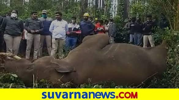 Elephant Death by Touching the Electrical Wire in Chikmagalur grg