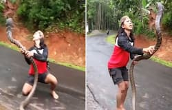 Watch: Woman catches giant snake with bare hands; leaves netizens jaw-dropped
