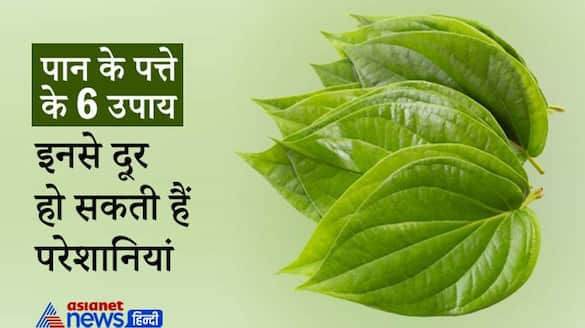 Remedies of Betel leaf, these may solve your problems