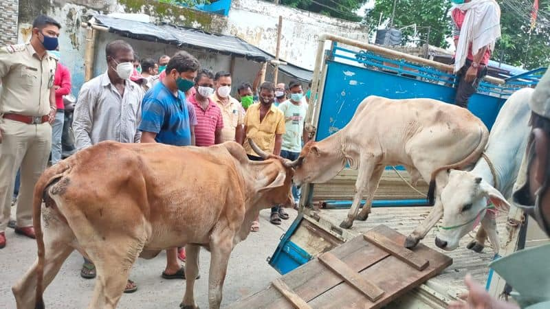 police personnel were out on the streets of Purulia to catch cows bmm