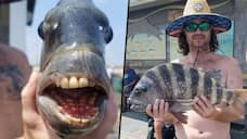 Believe it or not: Fish with human-like teeth found in North Carolina (Photo) - gps