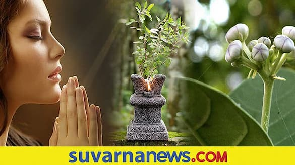 Planting these saplings in shravana month will bring you luck for sure