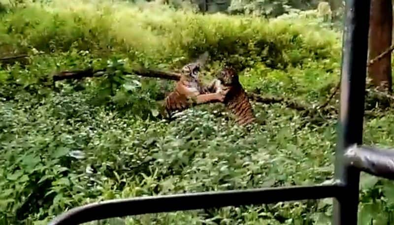 Forest departments order fire tiger