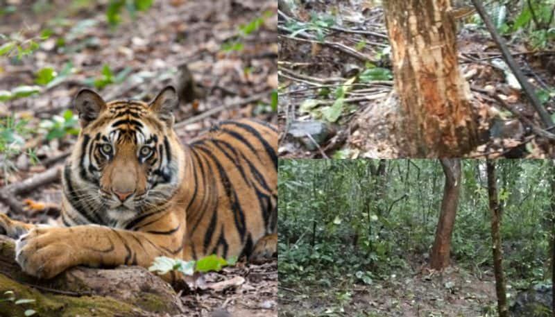 Gudalur tiger searching operation karnataka dog