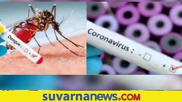 covid Decline  dengue Cases raises in Udupi District snr