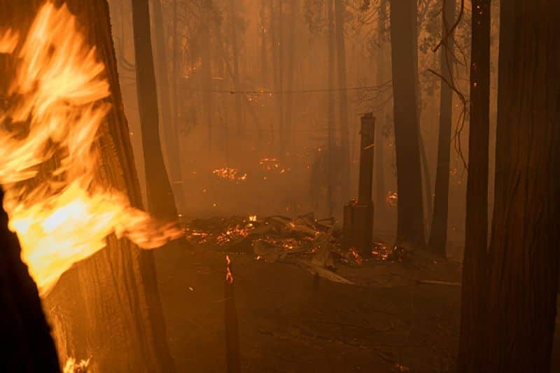 wildfire in Sequoia National Park in California Firefighters trying to save world's largest tree