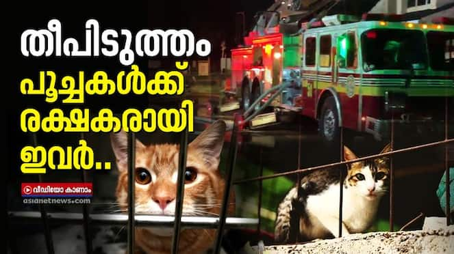 rescue operation in fire at florida pet shelter
