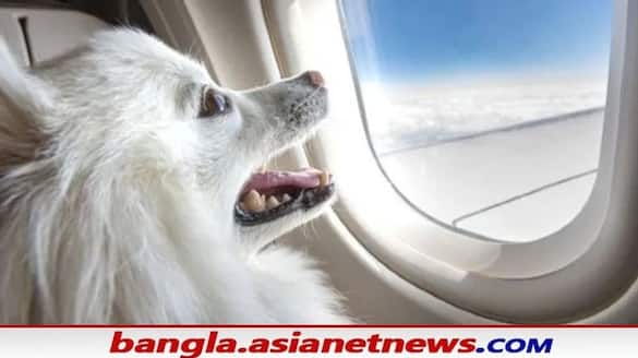 viral news dog owner books air India flights entire business class cabin for their pet bsm