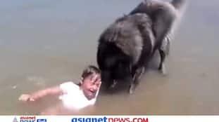 समुद्र में डूब रही थी छोटी सी बच्ची, कुत्ते ने दिखा दी वफादारी... Video देख लोगों ने खूब की तारीफ