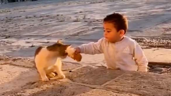 Little boy sharing food with a cat wins the hearts of netizens; watch the video-tgy